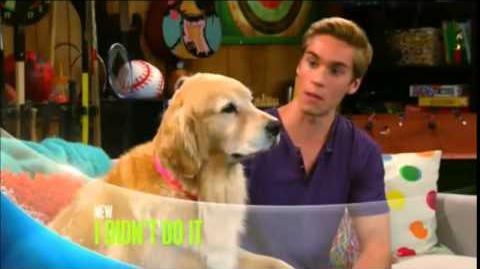 I Didn't Do It - Doggie Daddy Promo