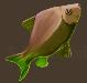 Meat carp