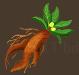 Veggies mandragora
