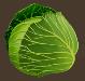 Veggies cabbage