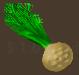 Veggies celery