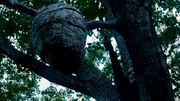 640px-Katniss tracker jackers