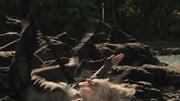 640px-Cashmere-death