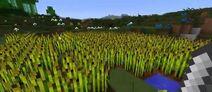 L farm