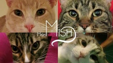We Are MishMish