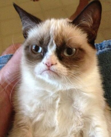 File:Grumpy Cat.jpg