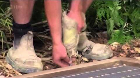 I'm A Celebrity 2012 - Bush Tucker Trial 2 - Bug Burial (12 11 2012)
