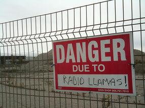 Rabid Llamas!