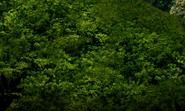 Junglebackground