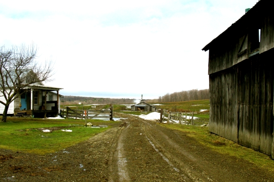 File:Amish-maple-syrup1.jpg
