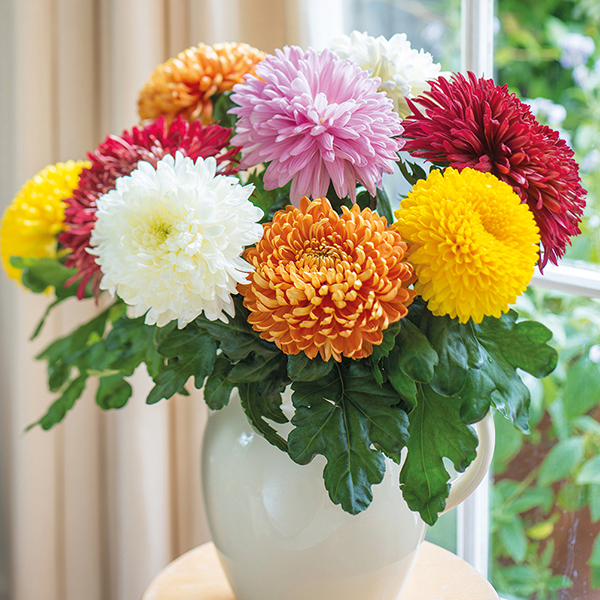 chrysanthemum bouquet in vase