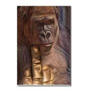 Ape sign language