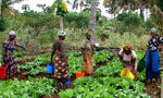Flickr, USaid.Africa, Maza Wanawake Kwanza Growers Association (1)