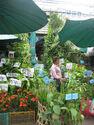 Plants chatuchak