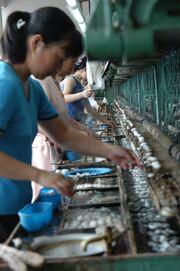 Silk Workers