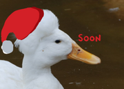 Quackfroteaser