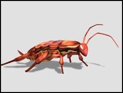 File:Cockroach th.jpg