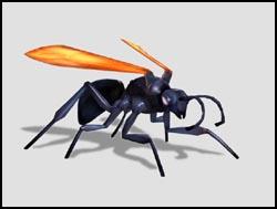 File:Wasp th.jpg