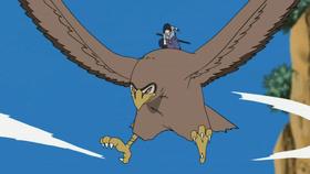 Halcón de Sasuke Anime