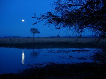 Blue-night-sky-trees
