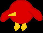 Bird body