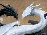 Dragones Sagrados del Yin Yan