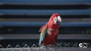 Parrot stopwatch