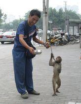 Shanghai-monkey-1-