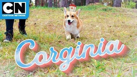 Infinity Train Corginia is For Corgi Lovers Travel Commercial Cartoon Network
