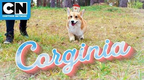 Infinity Train Corginia is For Corgi Lovers Travel Commercial Cartoon Network