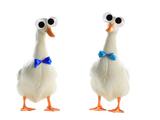 Cross-eyed Ducks Car