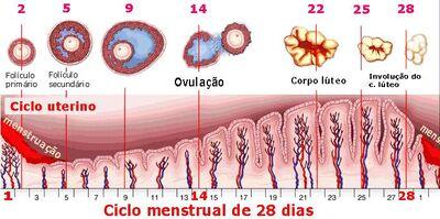 Figura 5 Viviani
