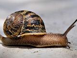 Snail Simulator
