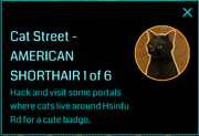 Cat Street - AMERICAN SHORTHAIR 1of 6