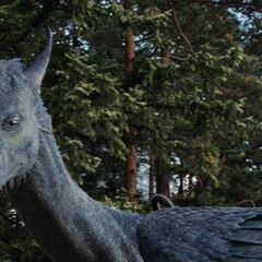 Saphira while she was growing up in the forest near Eragon's home