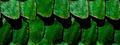 Miniatuurafbeelding voor de versie van 1 jan 2012 om 14:26