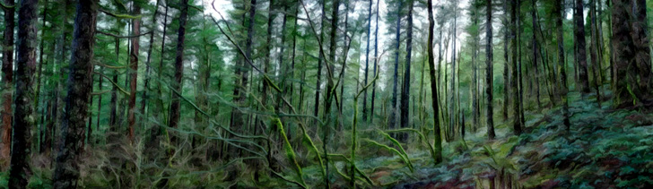Banner---forest1