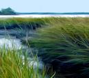 Kujir Marsh