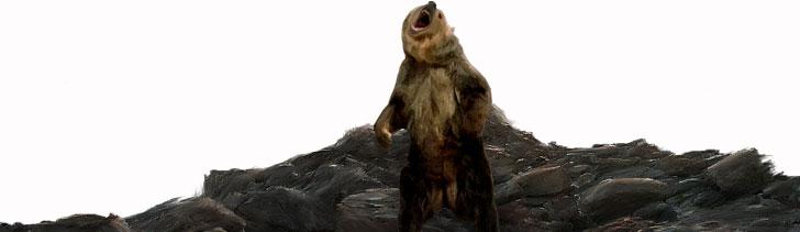 Npc-bear1