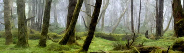 Banner---forest8