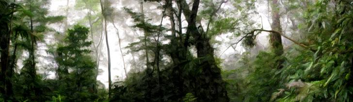 Banner---dense-forest2