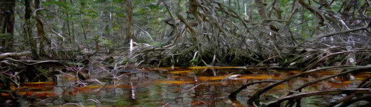 Banner---swamp3