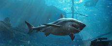 Dagger Sharks