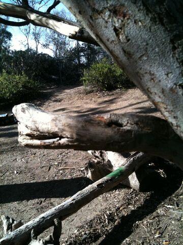 File:Duck Tree.jpg