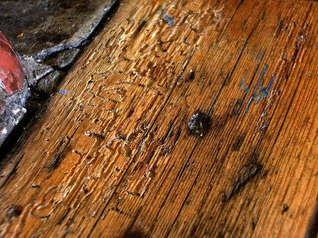 File:FloorboardWithWoodwormDamage.jpg