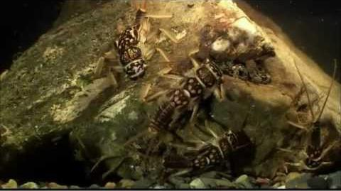 Documentary Insectia Aquatic Insects