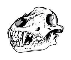 File:Wolf skull.jpg