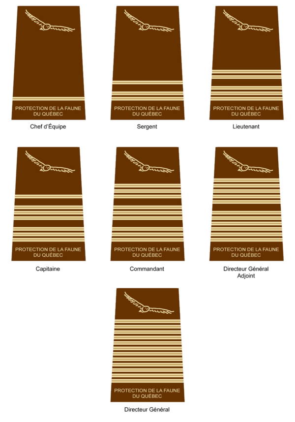 Insignes-de-grades