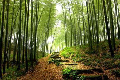 Day trail