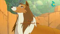 Lassie (Arabic) - Credits -6